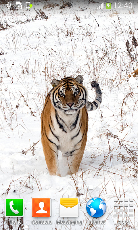 tiger live wallpapers top free apk android app android