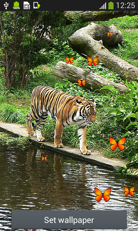 tiger live wallpapers free apk android app android freeware