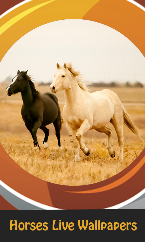 top horses live wallpapers free app download android