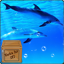 Download Underwater Swimming Dolphin Live Wallpaper for Android phone