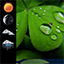 Weather Clock Widget Shamrock