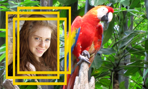 Wildlife Photo Frames Best free APK android app - Android Freeware