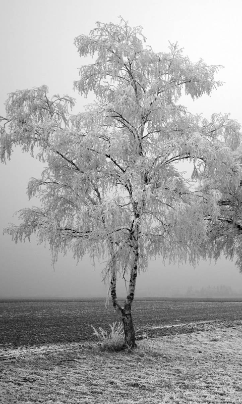 winter wallpapers free app download android freeware